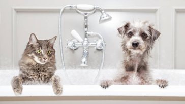 chien chat bain