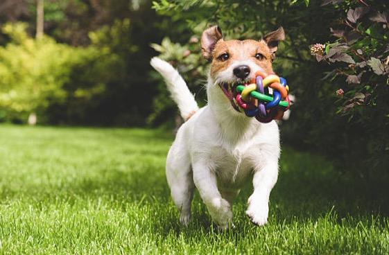 chien joue