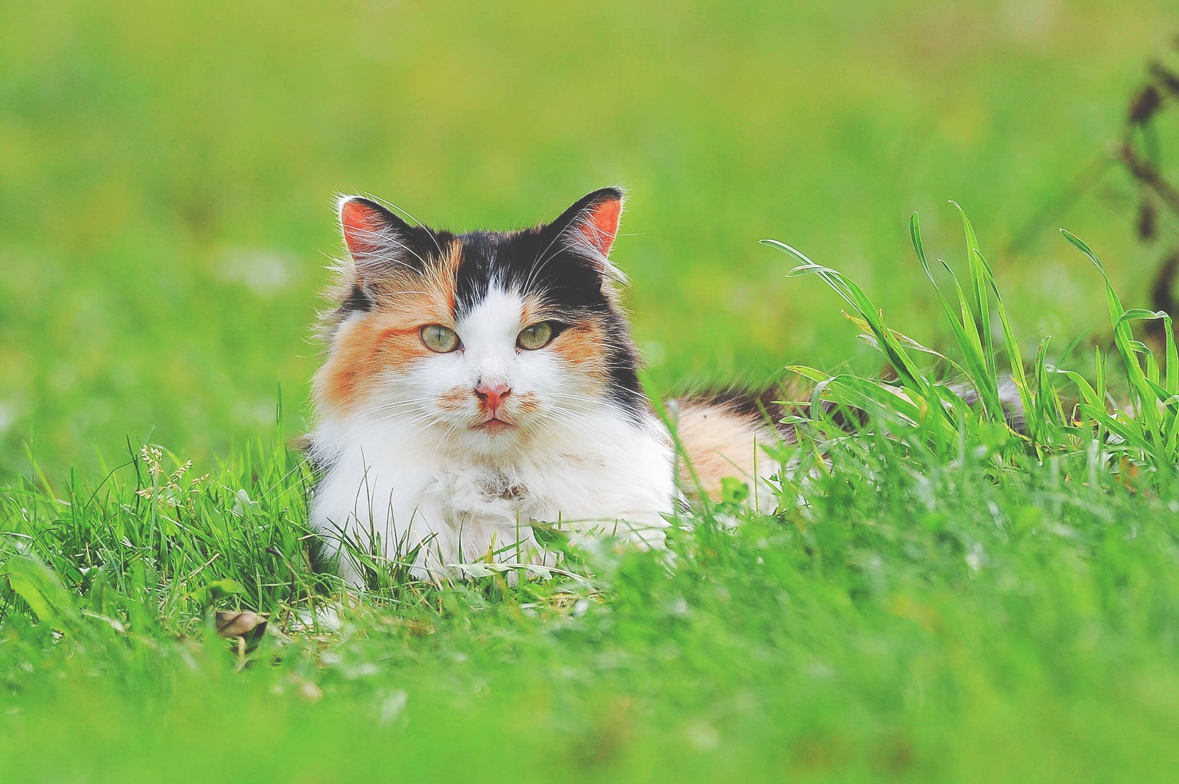 Voil comment cr er un r pulsif naturel et non dangereux pour les chats animalaxy - Repulsif naturel pour chat interieur ...