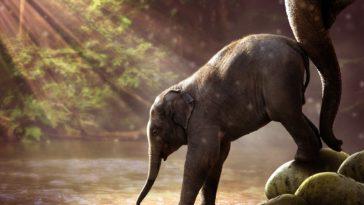 éléphant éléphanteau