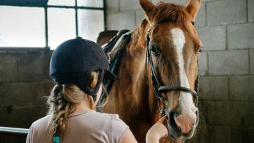 cheval équitation