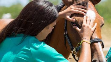 cheval vétérinaire