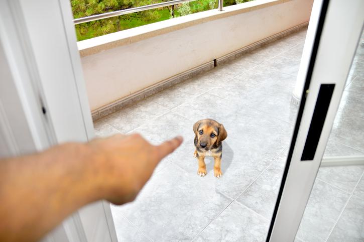chien puni