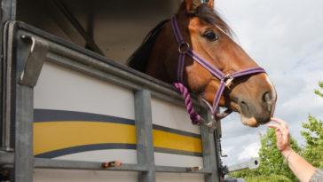 cheval transport