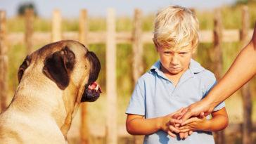 chien enfant peur