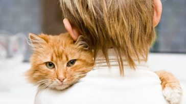 chat roux câlin enfant humain