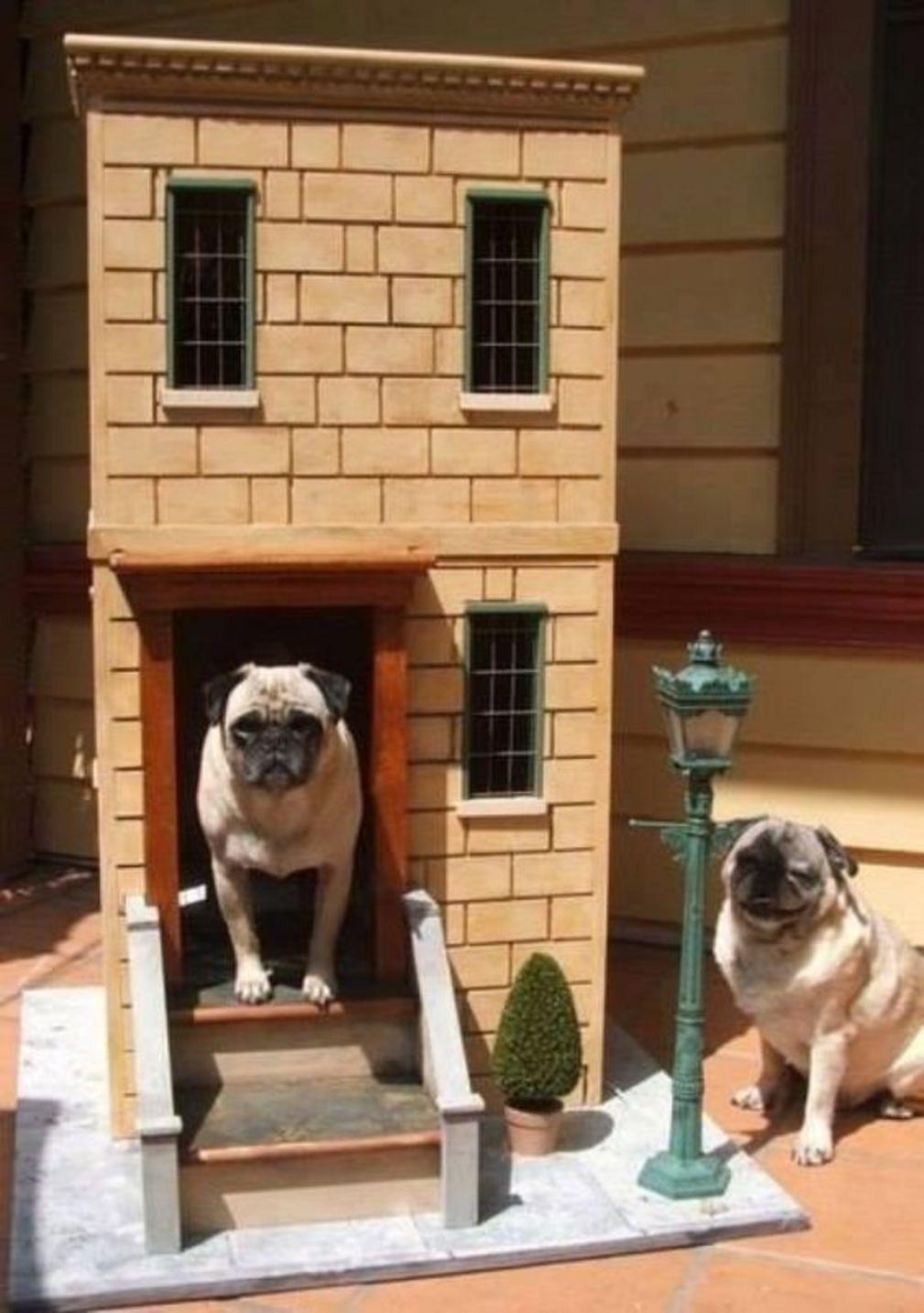 10 id es de niches pour chien hyper originales animalaxy - Idee niche pour chien ...