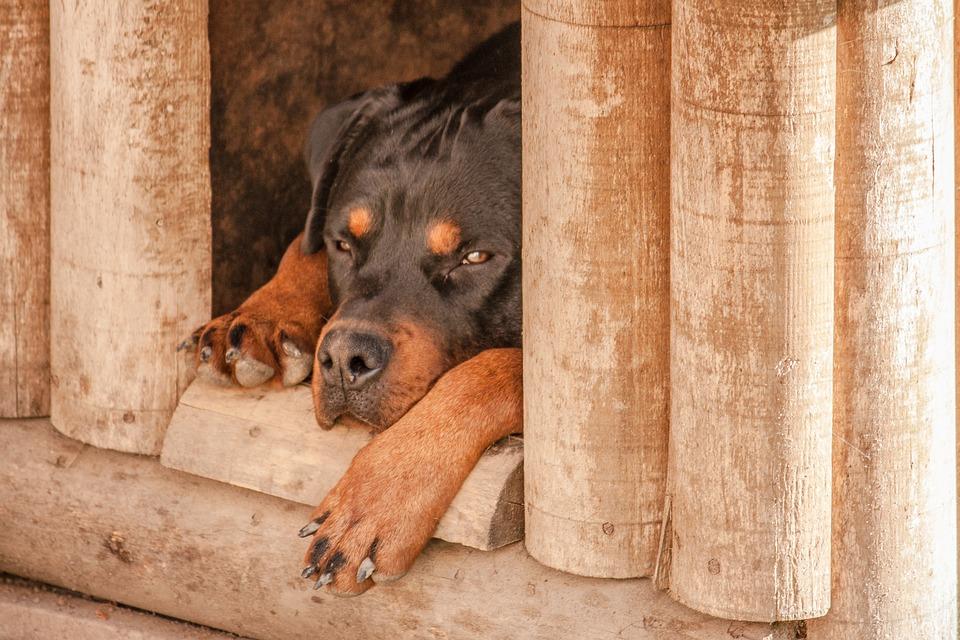 10 id es de niches pour chien hyper originales animalaxy. Black Bedroom Furniture Sets. Home Design Ideas