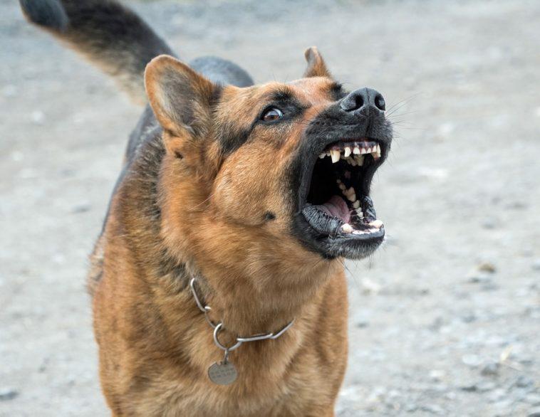 Photos des chiens les plus dangereux du monde