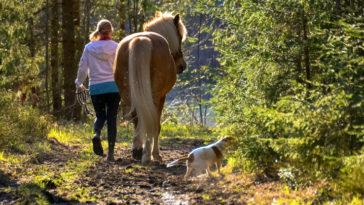 cheval promenade