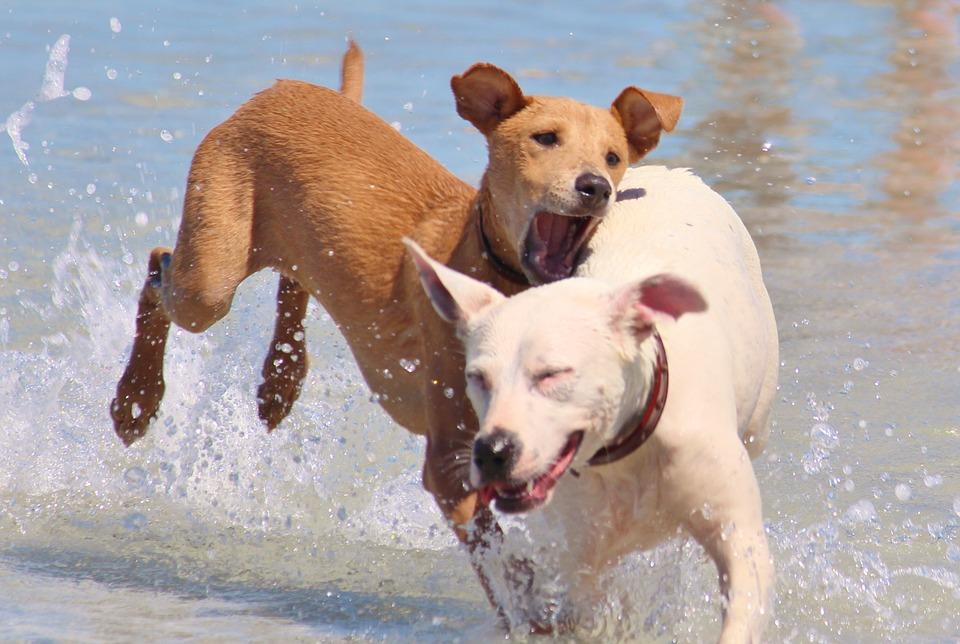 chiens mer