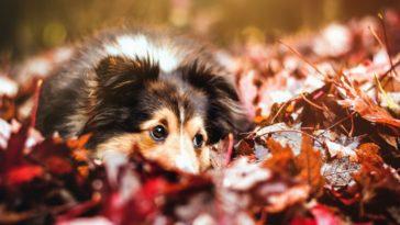 chien automne