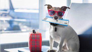 chien avion vacances voyage