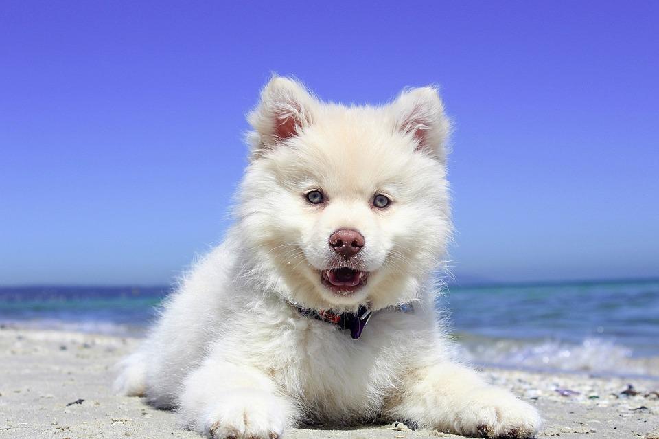 chien mer plage