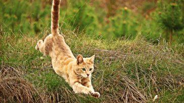 chat saut