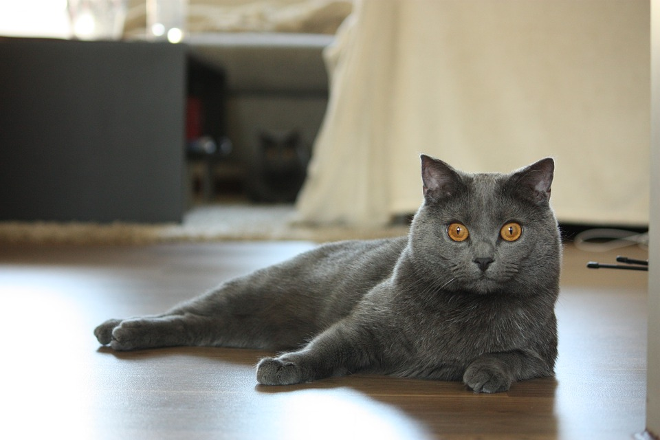 chat chatrtreux