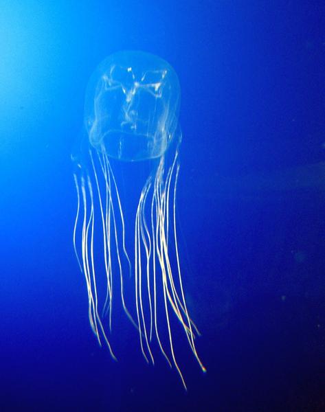 méduse boîte