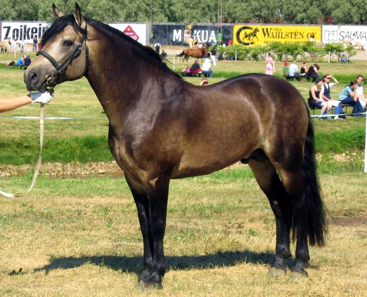 cheval louvet