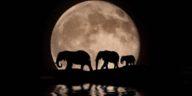 éléphants nuit