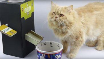 chat distributeur de croquettes carton