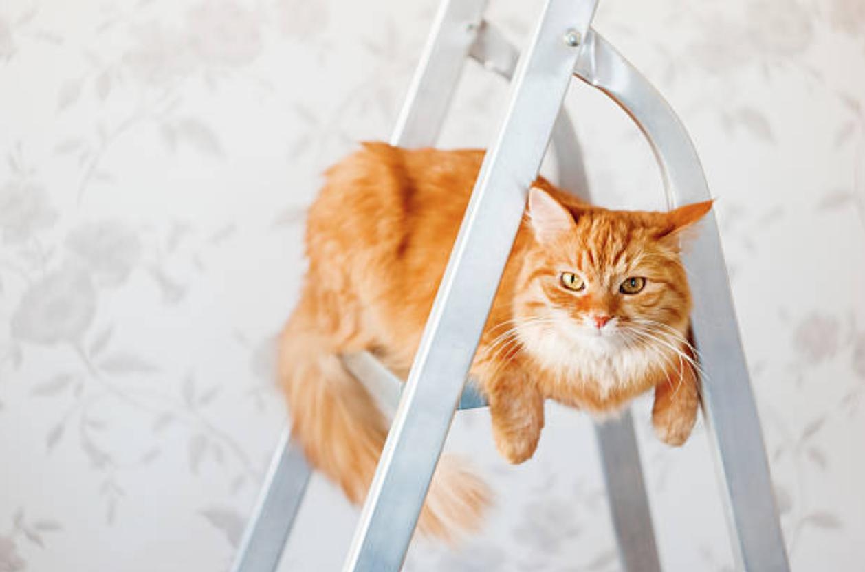 Comment Construire Un Arbre À Chat comment fabriquer un arbre à chat avec une échelle en 7