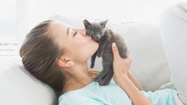 chaton femme câlin