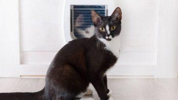chat chatière