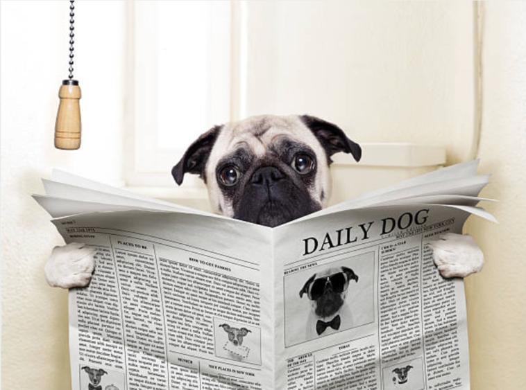 chien lit journal