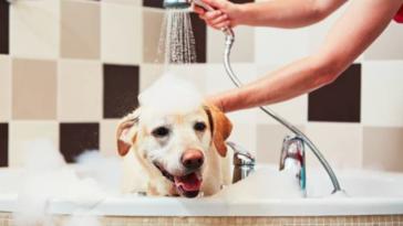 chien douche bain