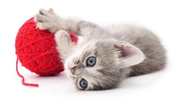 chaton pelote de laine