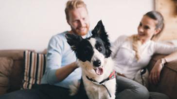 chien famille appartement