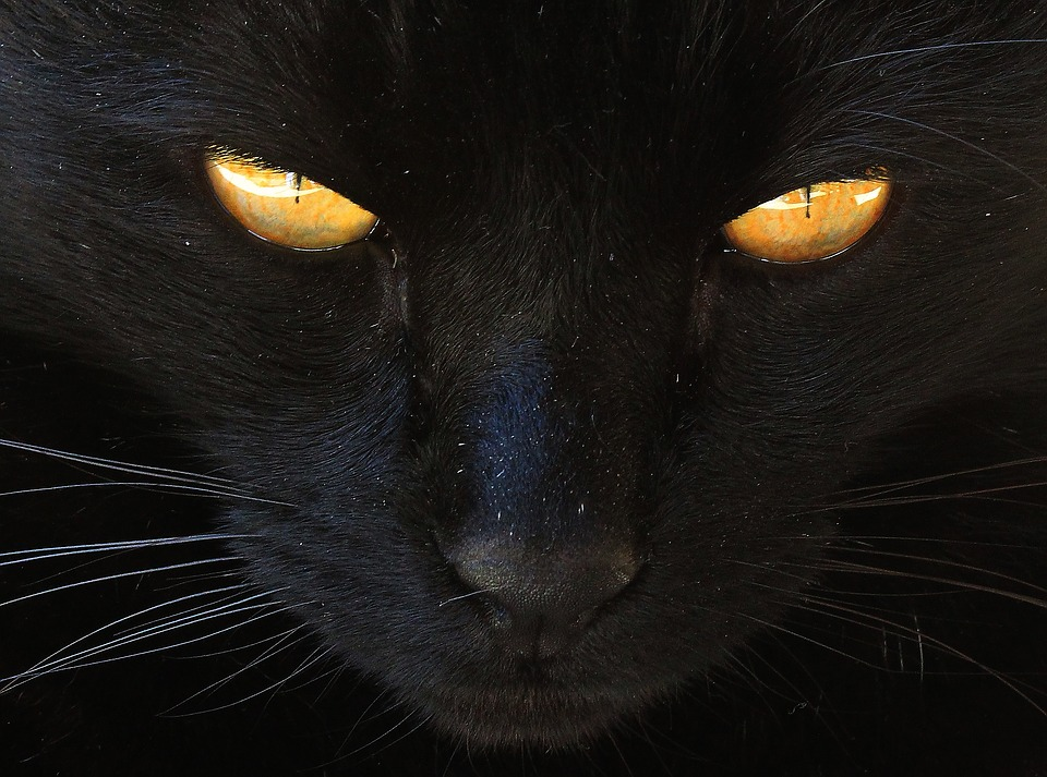 chaud noir chatte pic ébène lesbienne mobile vidéos