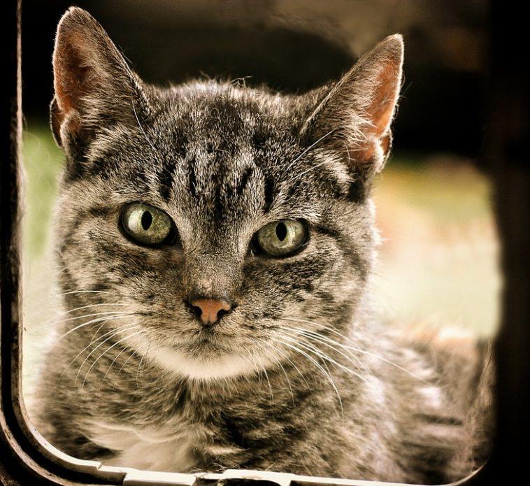 3 conseils pour apprendre votre chat utiliser sa chati re. Black Bedroom Furniture Sets. Home Design Ideas