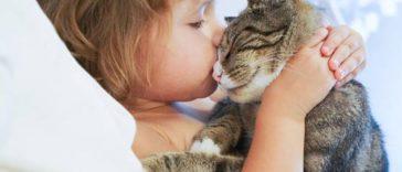chat câlin enfant