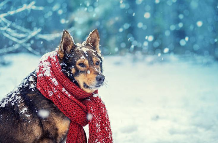 chien neige hiver écharpe
