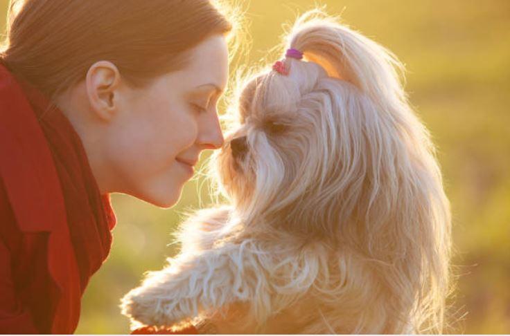 chien sent femme