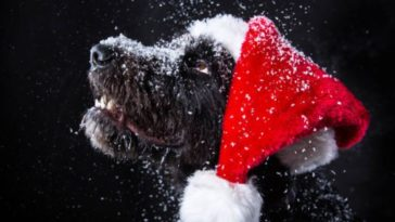chien noel neige