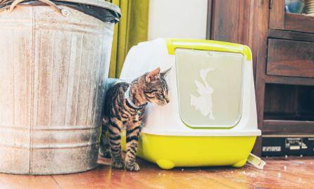 chat litière