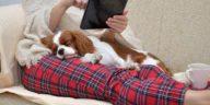 chien cavalier king charles dort câlin