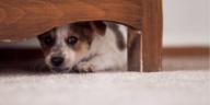 chien chiot peur