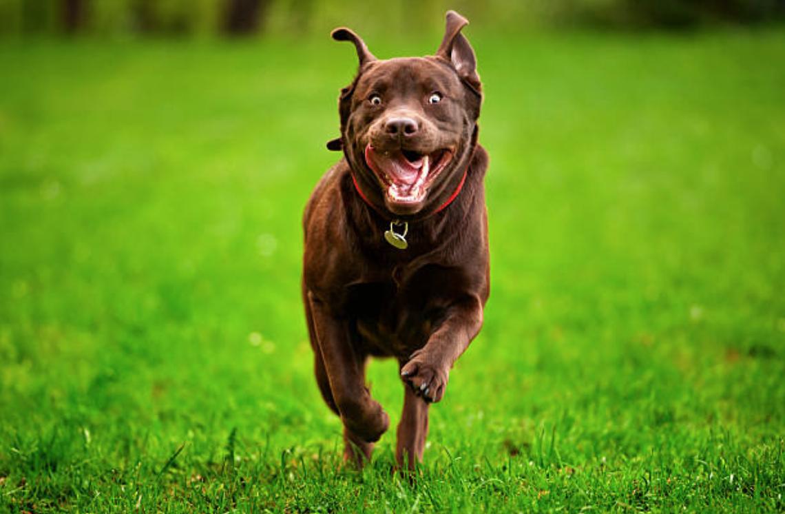 chien court content
