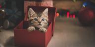 chaton cadeau noel