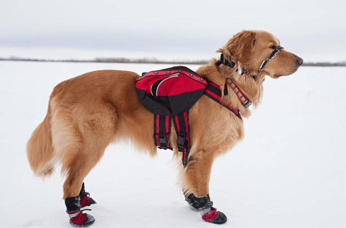 chien neige bottes sac