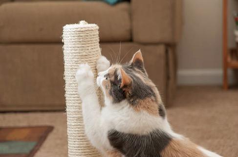 quel griffoir choisir pour un chat heureux et un canap pargn. Black Bedroom Furniture Sets. Home Design Ideas