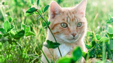 chat roux herbe dehors plantes