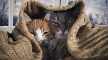 chats couverture froid hiver