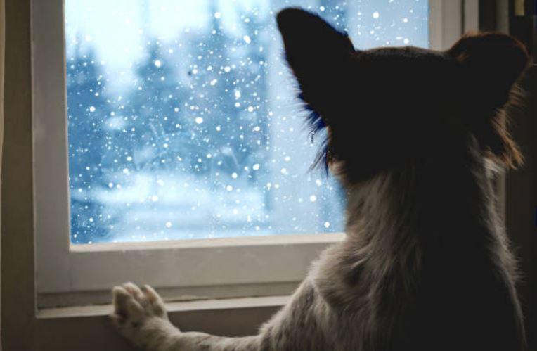 chien regarde fenetre neige