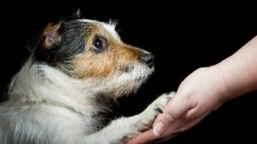 chien main