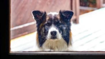 chien dehors neige fenêtre