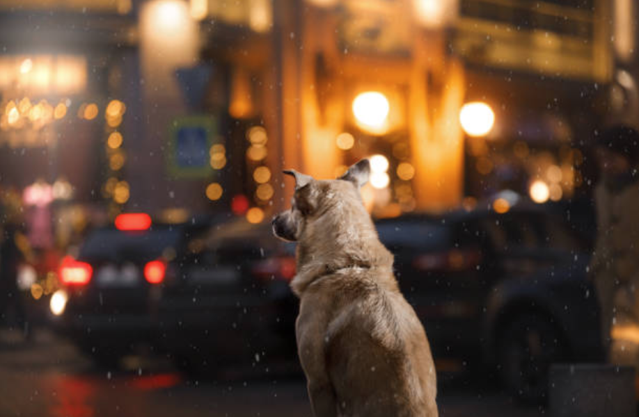 chien rue nuit ville